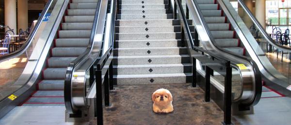 tiki and stairs and escolator